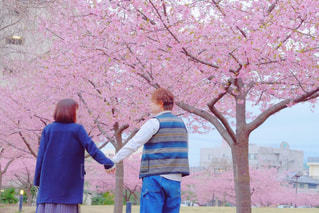 桜咲くの写真・画像素材[1078714]