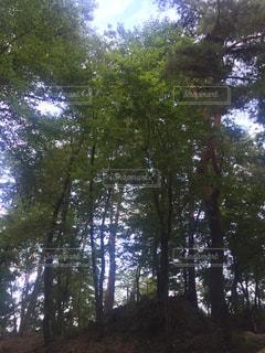 自然の写真・画像素材[321448]