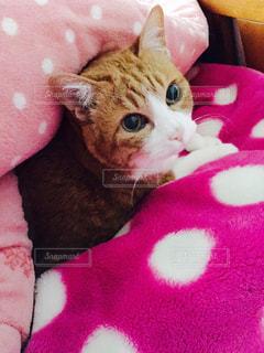 猫の写真・画像素材[320077]