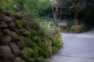 自然の写真・画像素材[387482]