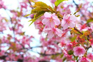 花の写真・画像素材[387489]