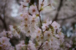 自然の写真・画像素材[430274]