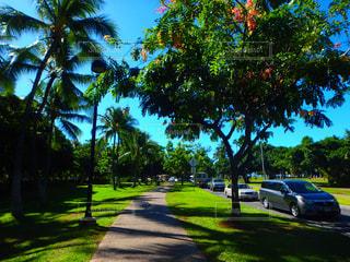 ハワイの写真・画像素材[320431]