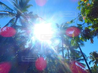 ハワイの写真・画像素材[320438]