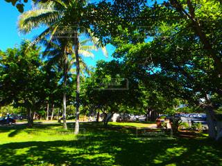 ハワイの写真・画像素材[320439]