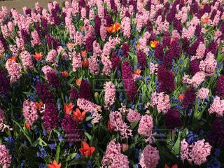 花の写真・画像素材[319972]