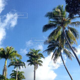 南の島のヤシの木と青空の写真・画像素材[1050446]
