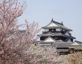 松山城と桜の写真・画像素材[1121079]