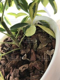 観葉植物の写真・画像素材[537924]