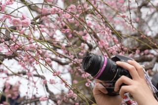 春の写真・画像素材[370763]