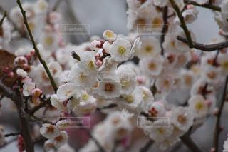 風景 - No.379883