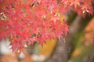 ピンクの花の木 - No.883776