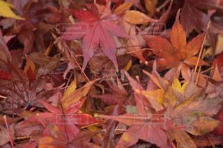 木にピンクの花の束 - No.883778