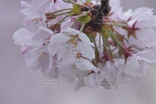 自然の写真・画像素材[1091774]