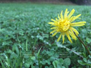 花の写真・画像素材[321350]