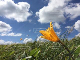 空の写真・画像素材[321662]