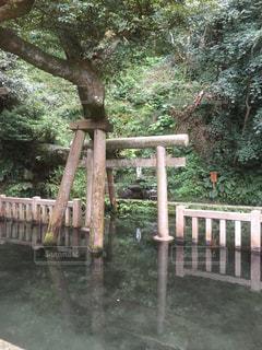 神社の写真・画像素材[334101]
