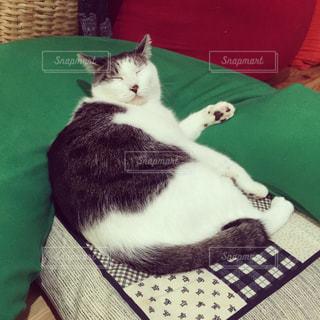 猫の写真・画像素材[321498]