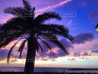 海の写真・画像素材[542239]