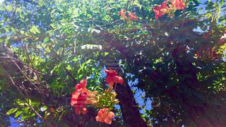 散歩道の花 4の写真・画像素材[734506]