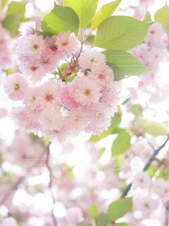 春 - No.339409