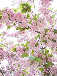 春 - No.339410