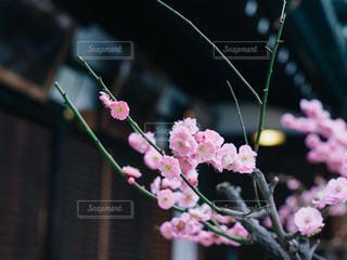 花 - No.384337