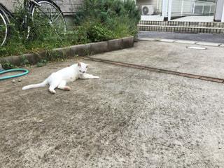 No.322362 猫