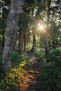 自然の写真・画像素材[9218]