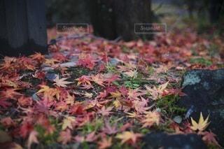 自然の写真・画像素材[9195]