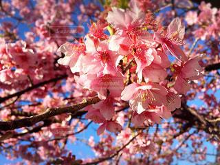 春の写真・画像素材[322787]