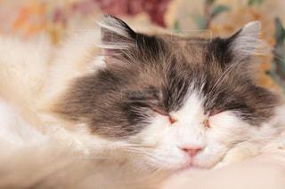 猫の写真・画像素材[322741]