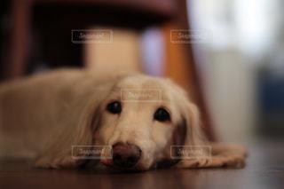 犬の写真・画像素材[322774]