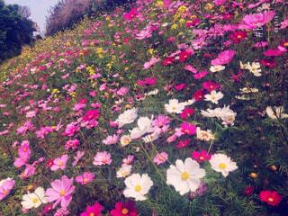 花の写真・画像素材[171377]