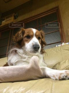 犬の写真・画像素材[323630]