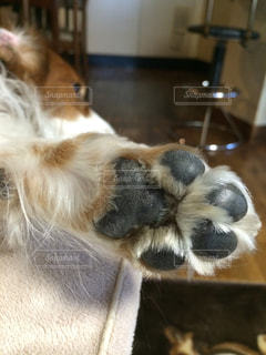 犬の写真・画像素材[323631]