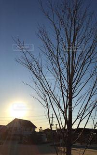 冬の写真・画像素材[322976]
