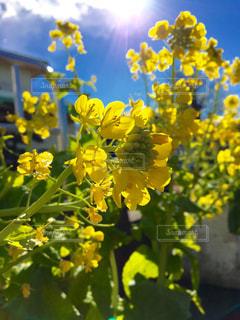 花の写真・画像素材[326588]