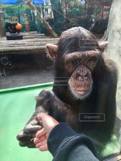 動物の写真・画像素材[344679]