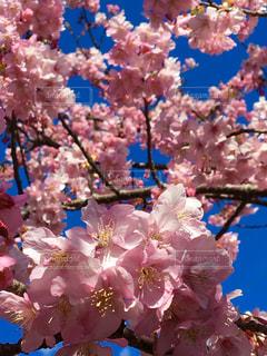 花の写真・画像素材[345945]