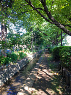 小川の写真・画像素材[364637]