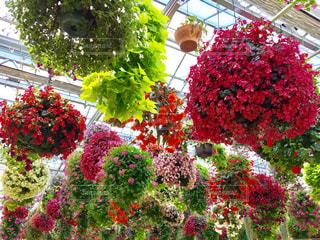 花の写真・画像素材[399427]