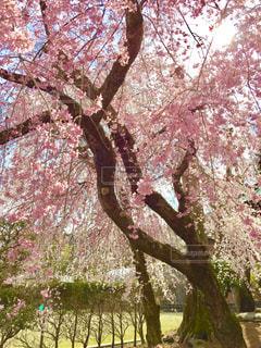 近くの木のアップの写真・画像素材[1106098]