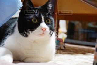 白い面の上に座って猫の写真・画像素材[973260]