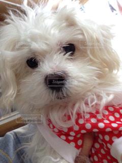 犬の写真・画像素材[326949]