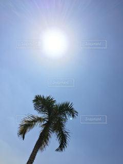 太陽の写真・画像素材[346141]