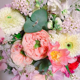 花の写真・画像素材[325564]