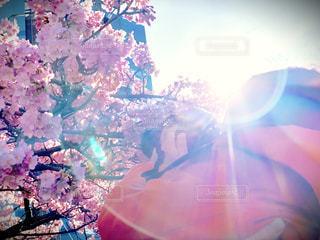 桜を撮る4歳児の写真・画像素材[1849075]