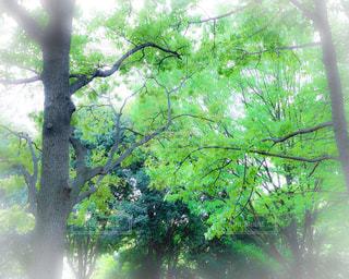 森の写真・画像素材[2119781]