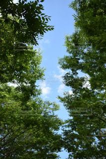 大きな木 - No.706242